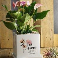[캘리그라피 메세지화분-대형] 꽃보다 OOO
