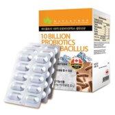 메이플트리 프로바이오틱스 생유산균 500mg x 60캡슐