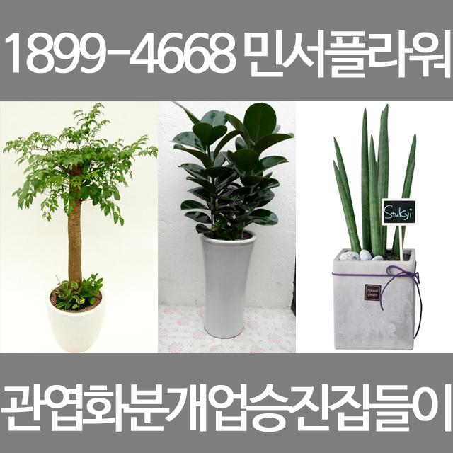 광주광역시꽃배달 개업화분 이사선물 초특가! 예쁜화분