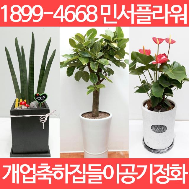 광주광역시개업화분 화원 꽃가게 개업선물 이사선물 출산선물