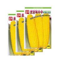 아시아종묘/옥수수씨앗종자 초당 옥수수(VSC-03) 100립*3
