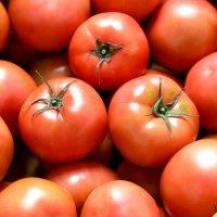 싱싱 완숙 토마토 5kg 4-5번