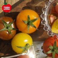 2021 오색 칵테일 토마토 5kg