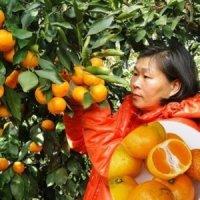유기농 새코미 제주 노지감귤 5kg