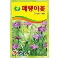 패랭이꽃씨앗 약 150립 - 꽃씨
