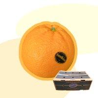 호주산 네이블 오렌지 특대과 1Box 17kg 56개입,72개입, 88개입