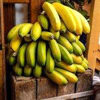 제주도 무농약 바나나 1.5kg, 2.5kg