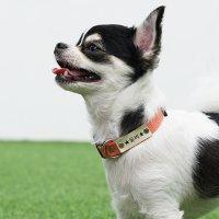 유봉펫 이름무료각인 소형견 중형견 강아지 목줄