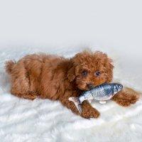 해밀펫 스마트피쉬90min 강아지자동장난감 노즈워크 펫피트니스 로봇 고양이놀이 놀이기구