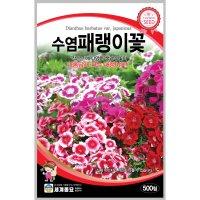 수염패랭이꽃 500립 / 씨앗 종자 꽃씨 꽃밭 화단