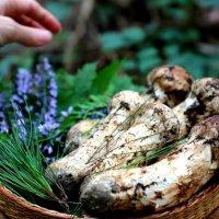자연산 송이버섯, 강원도 국내산 자연 송이 500g, 부모님 선물(추석 설 명절)