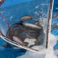 황금수산365 참좋은장어 국내산자포니카 풍천장어 생장어 -당일 손질