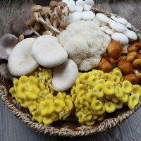 국내산 느타리 송이 목이 모듬버섯세트 1kg/2kg
