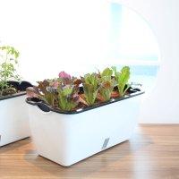 소소정원 아파트 베란다텃밭 자동급수 대형 화분