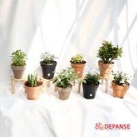실내공기정화식물 몬스테라호야테이블아레카야자 율마스투키유칼립투스 반려 집에서키우기쉬운식물