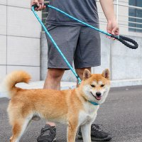 5H펫 [고급버전] 훈련용 교육용 강아지목줄 소형견 중형견 대형견 리드줄