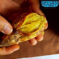 해남 햇 고구마 꿀고구마 3kg 5kg 10kg 호박 밤 자색 베니하루카