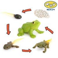 제트 16종 성장과정 성장 동물 피규어 한살이 개구리 개미 거미 나비 달팽이 거북이 문어