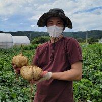 히카마감자 멕시코감자 국내산 10kg, 산지직송 얌빈 JICAMA 생 슈퍼푸드