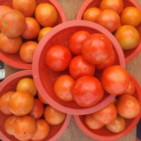 [맛나과일] 강원영월 동강토마토 5kg 한박스