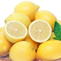 정품 팬시 레몬 22과